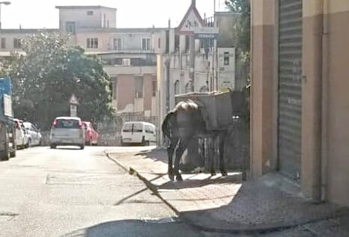 Photo of Asini sfruttati per trasporto merci a Salerno, la denuncia