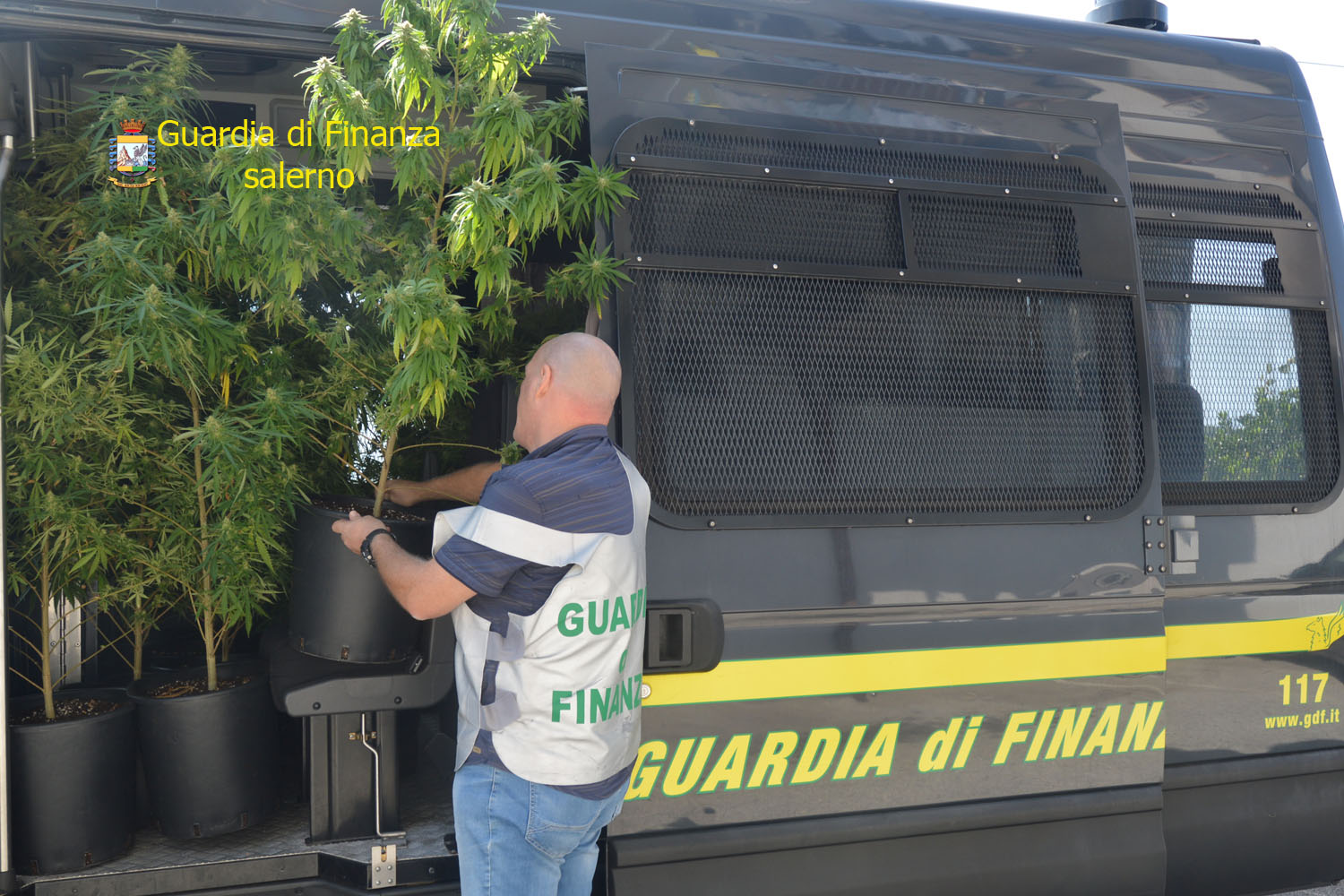Photo of Salerno, coltivazione di marijuana fuori al balcone di casa: arrestato